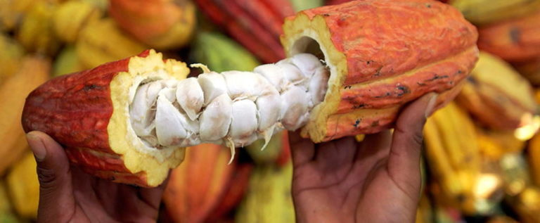 Colombia: Is Cocoa The New Cocaine?