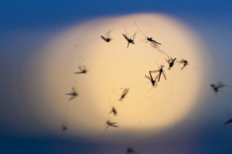 Argentina prepares to fight Zika with sterile mosquitoes by radiation