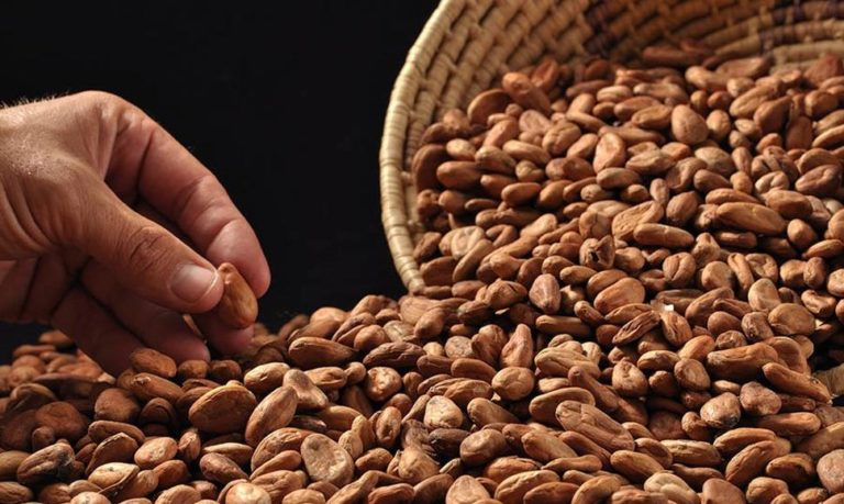 Nicaragua Cocoa Production to Grow 25% in 2018