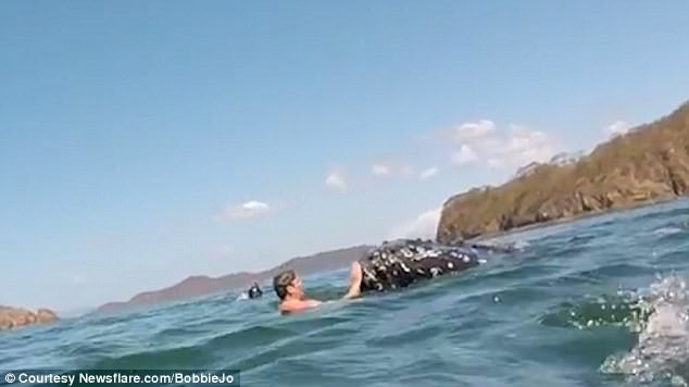 Divers Up-Close With Baby Humpback Whale in Waters Off Costa Rica