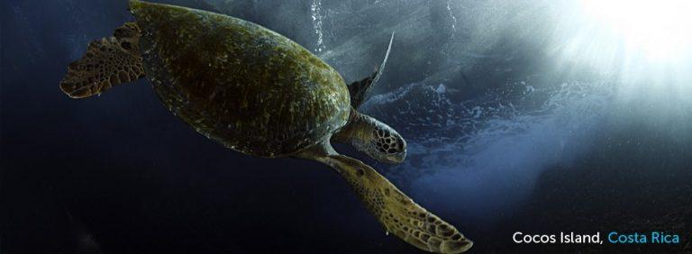 Costa Rica – Ecuador Swimway Proposed To Protect Marine Life