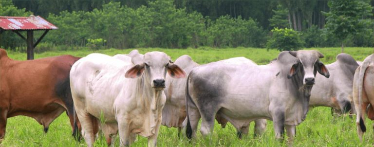 First Outbreak of Bovine Rabies Of The Year