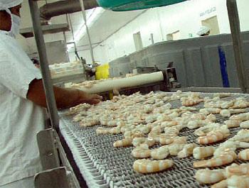 Shrimp Conflict Between Mexico and Honduras Continues