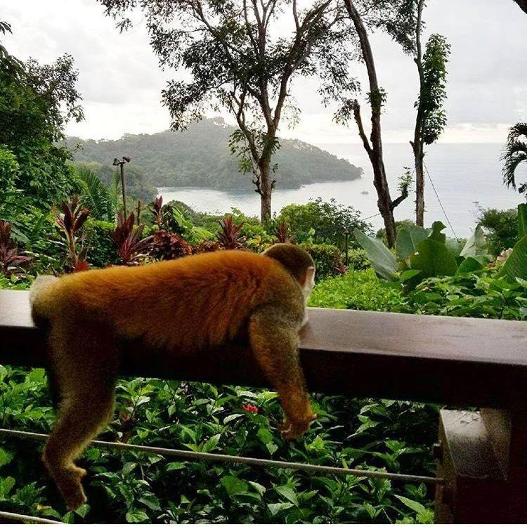TripAdvisor Rates Costa Rica Resort #2 Hotel in the World