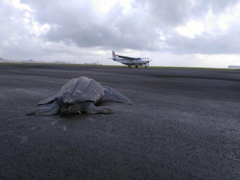 Turtle Shuts Down Limon Airport