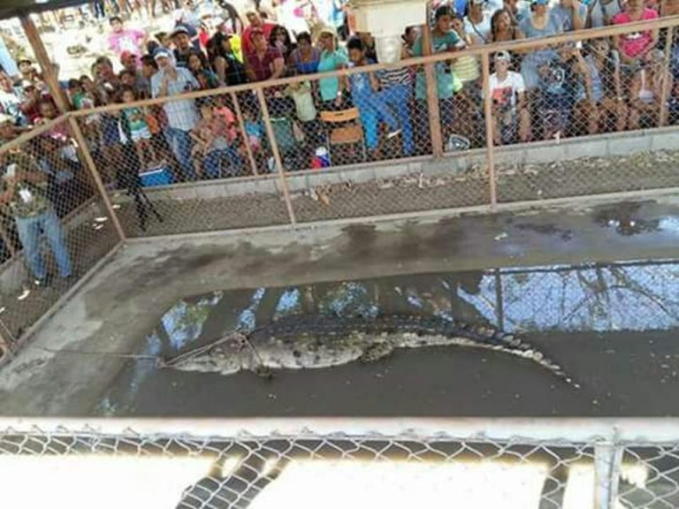 Residents Of Guanacaste Once Again Denied Permit To Catch (and Release) A Crocodile
