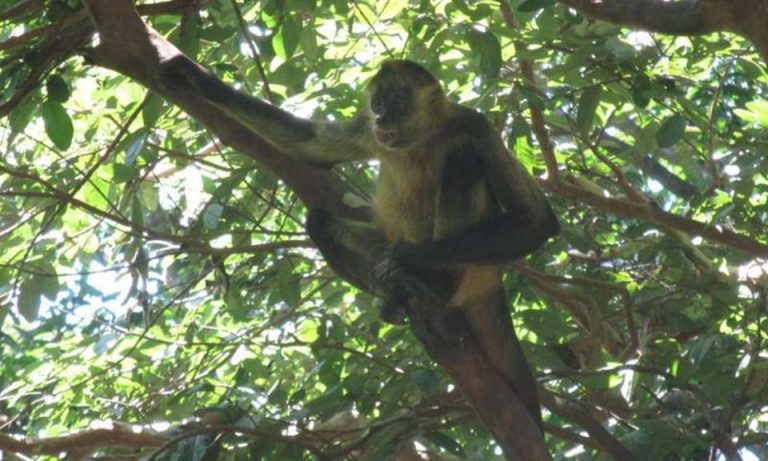 Plants Faring Worse Than Monkeys in Forests of Costa Rica