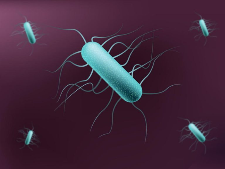 'Listeria Costaricensis' Is The New Bacteria Found In An Alajuela Drain