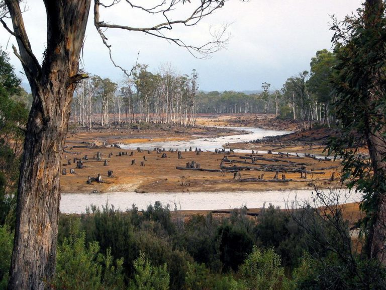 Latin America One of Three Regions With Persistent Deforestation