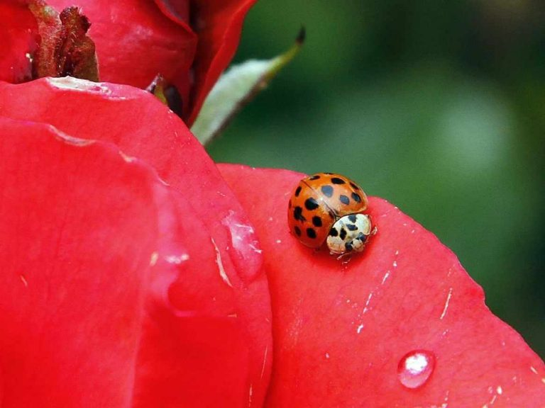 Bye bye bugs? Scientists fear non-pest insects are declining