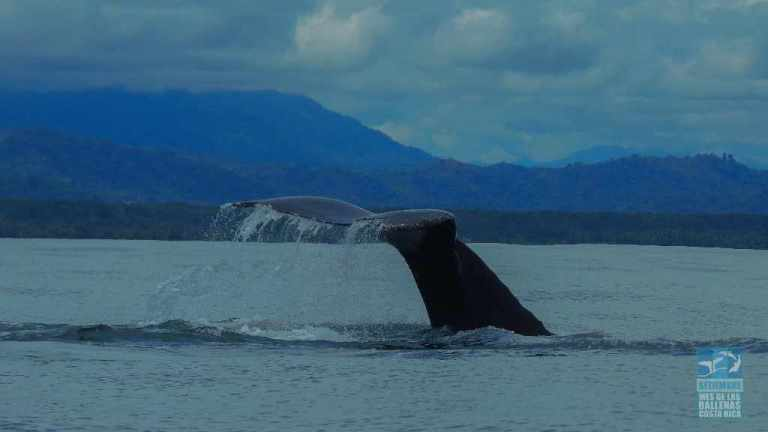 Friday officially starts the 10th Annual Whale and Dolphin Festival in Osa