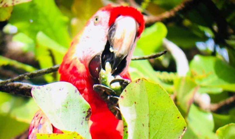 Exploring the natural wonders of Costa Rica