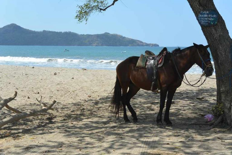 The Horse and The Sea
