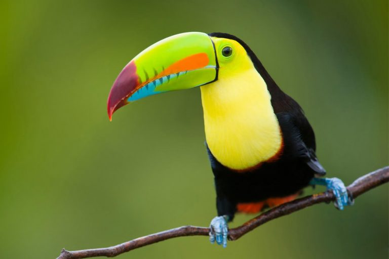 Costa Rica Is For The Birds. And More.