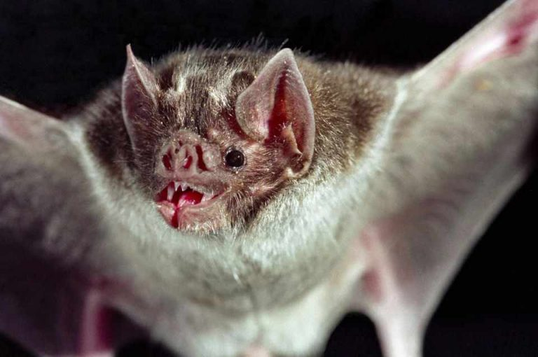 Biologist infected with rabies died