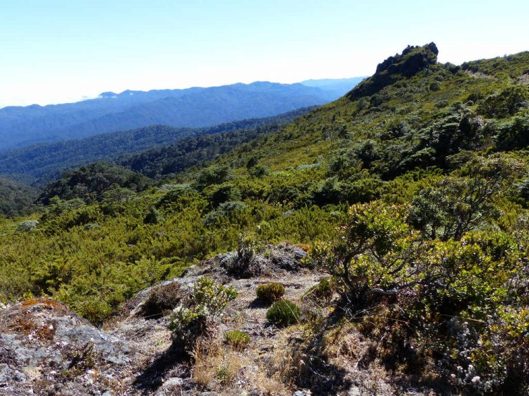 PARAMO: The little known highland tundra of Costa Rica