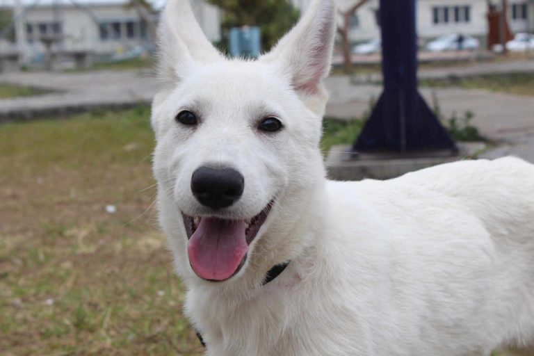 """Meet """"Koa"""" The New Canine Agent Of The OIJ"""