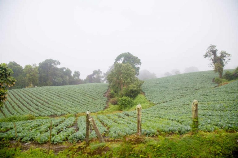 Bad Times for Costa Rica's Agricultural Sector