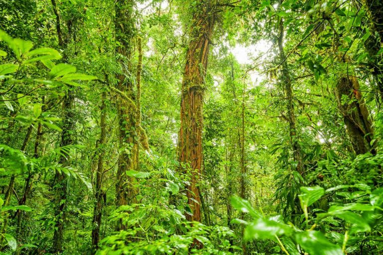Costa Rica has doubled its forest cover in the last 30 years