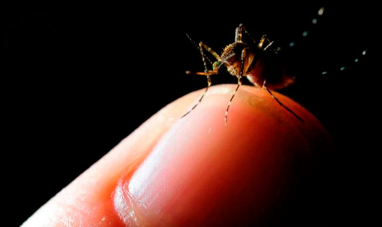 4 Cases Of Malaria Confirmed In Limon