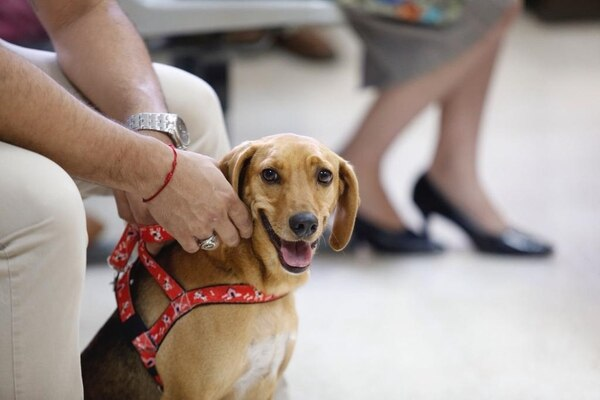 For the first time in Latin America a dog is the victim of abuse at trial