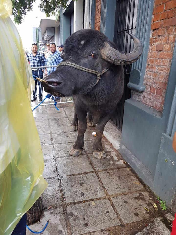 Circus Without A Tent: The Tope Nacional 2019