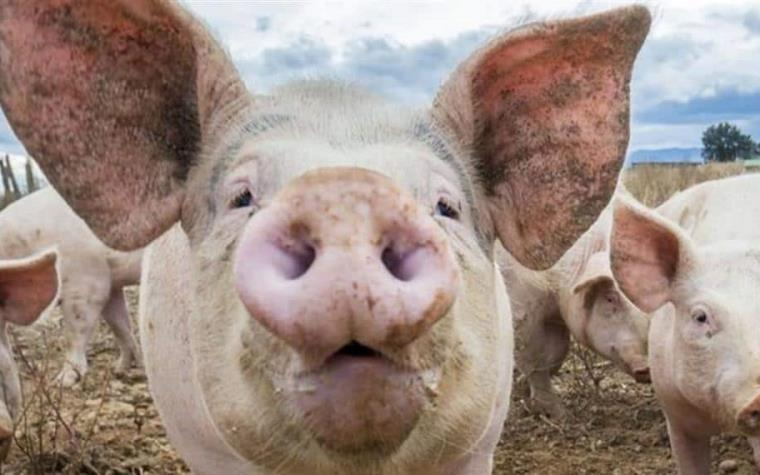 Costa Rica To Export Pork to China