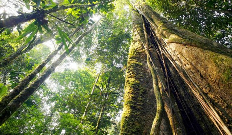 Central American Countries Rally To Protect Threatened Forests