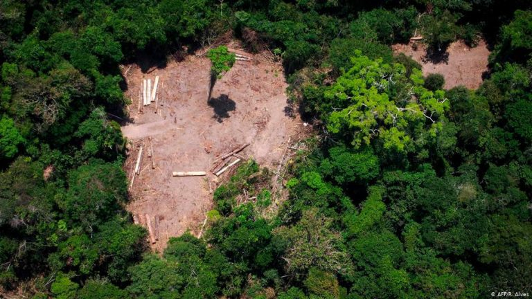 Amazon ecosystem could collapse in less than 50 years
