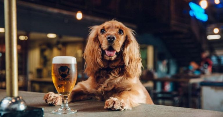 Stay at Home: Adopt A Pet Get Free Beer For 3 Months