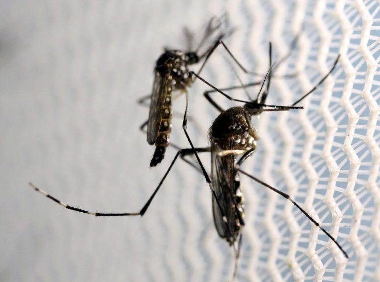 'Dengue kills too' – Latin America faces two epidemics at once