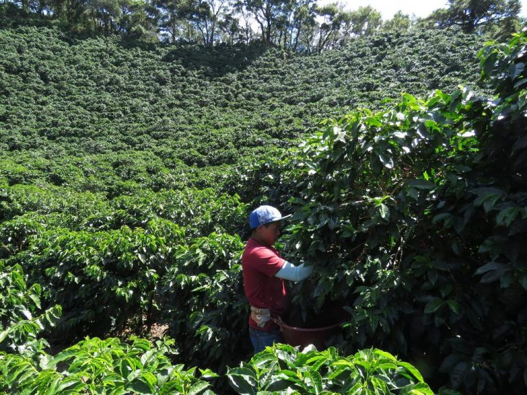 Government establishes mechanism to legalize migrant labor with roots in Costa Rica