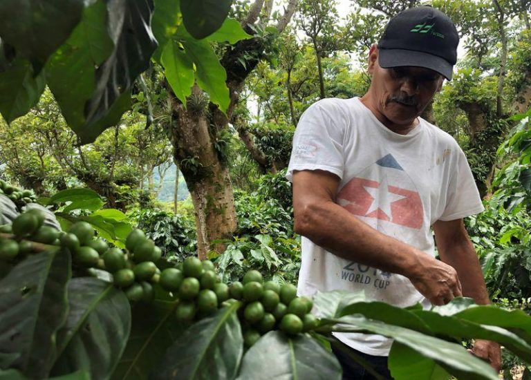 Costa Rican coffee may go unharvested as pandemic creates migrant worker shortage