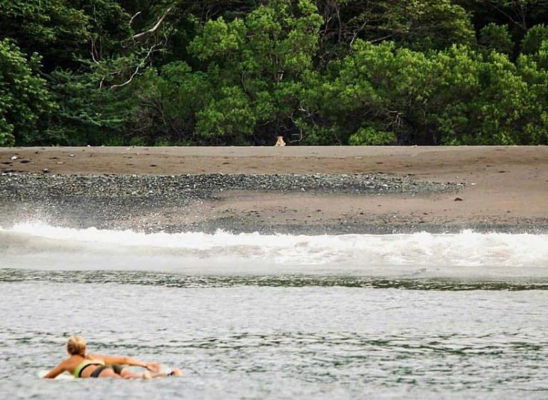 Surfing with a Jaguar in Costa Rica