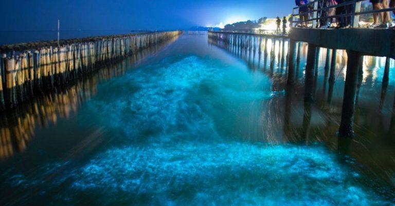 """Puntarenas invites tourists to appreciate the """"phenomenon of bioluminescence"""""""