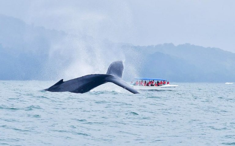 Fisheries and Aquaculture analyzes suspending fee for whale watching