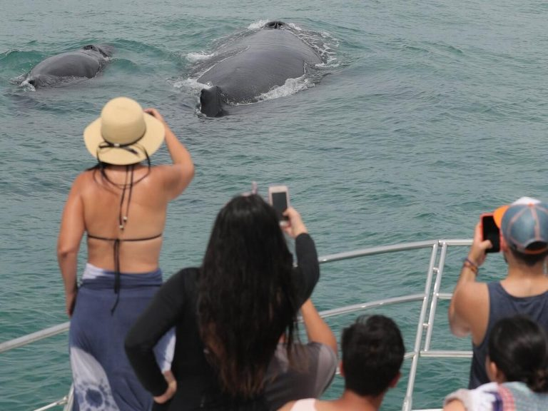 It's now free to watch the humpback whales