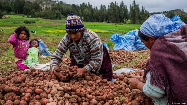 Global Ideas 'Climate change is making us stronger' — Resilient Bolivian women adapt to global warming