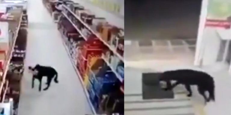 Colombia: Dog steals food from the supermarket and even disinfects its paws when leaving
