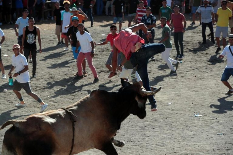 Bullfights are conditioned to demand for hospital beds