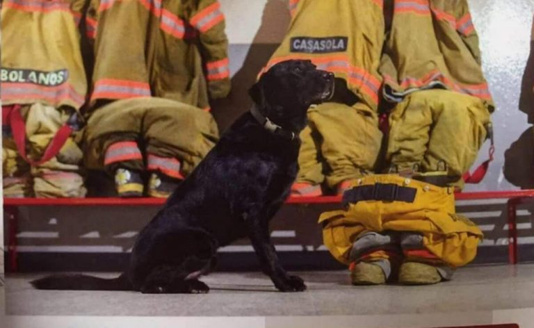 Firefighters mourning the death of Onix, the search dog