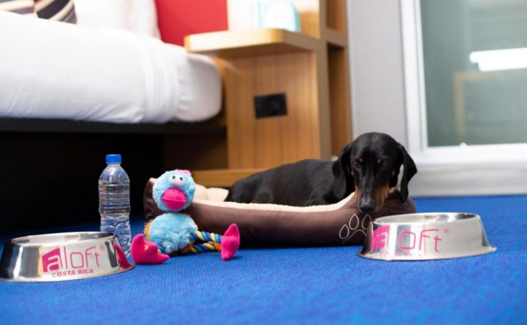 Hotels in Costa Rica join the 'pet friendly' trend to attract travelers