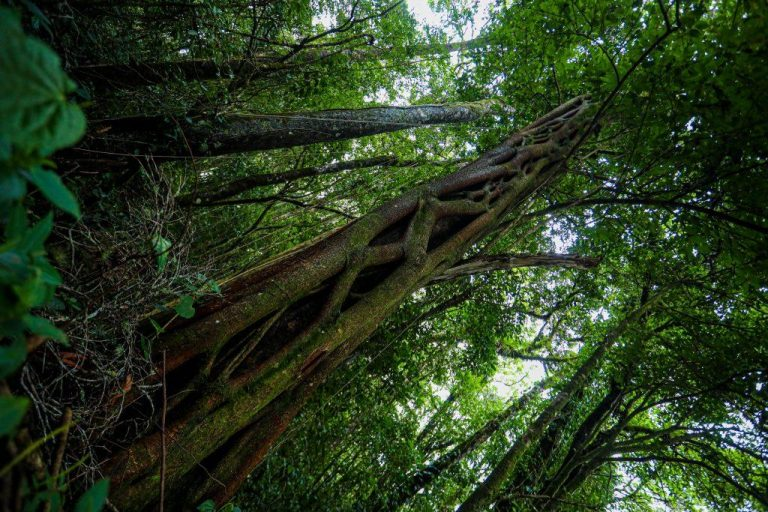 5,075 hectares of Coto Brus make up the country's ninth biological reserve