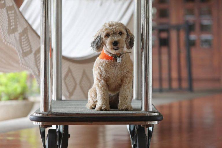 Marriott in Costa Rica Now Pet Friendly Hotels