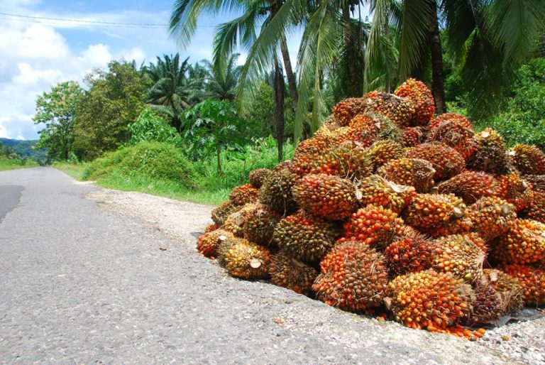 Costa Rica is the Main Exporter of Palm Oil in 2020