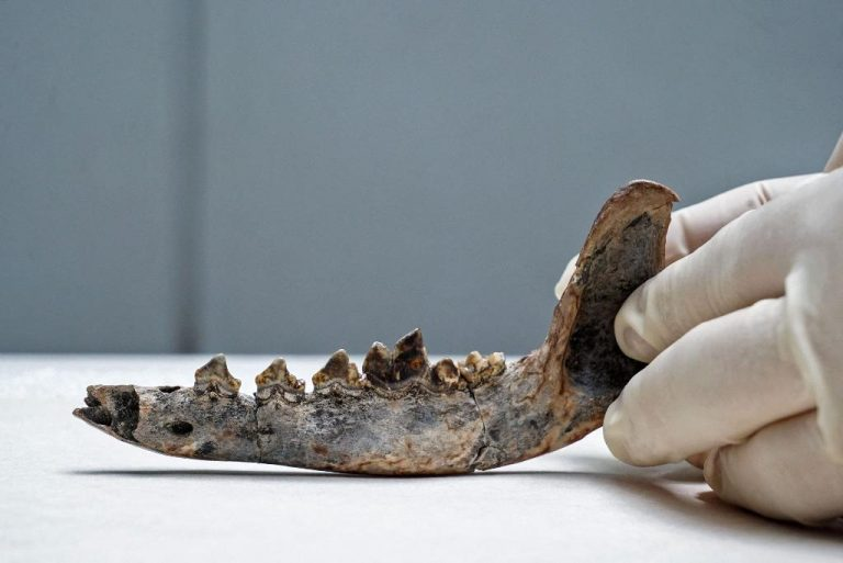 Fossil shows humans, dogs lived in Cental America 12,000 years ago